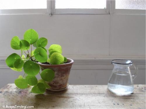 نکات مهم نگهداری از گیاهان زینتی را بیاموزید