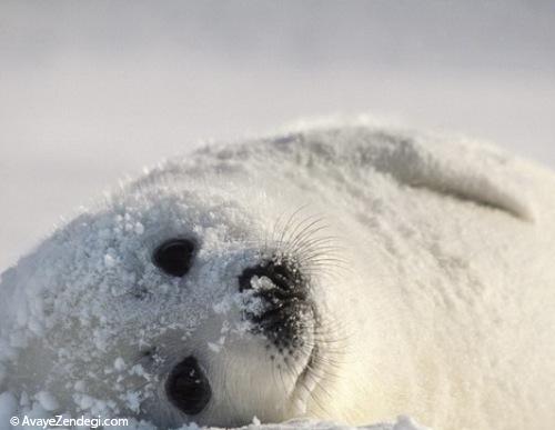 حیوانات در زمستان چگونه خود را گرم میکنند؟