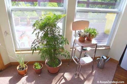 نکاتی برای آبیاری گلدان های آپارتمانی
