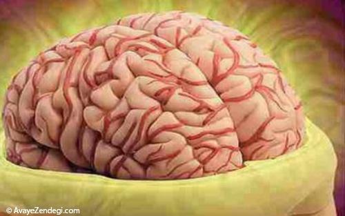 راست مغزید یا چپ مغز ؟!