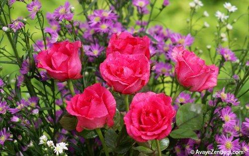 فال گل ها