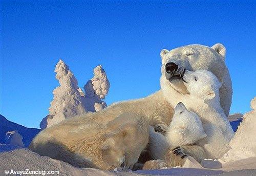 عکسهای زیبا از رابطه عاشقانه حیوانات (1)