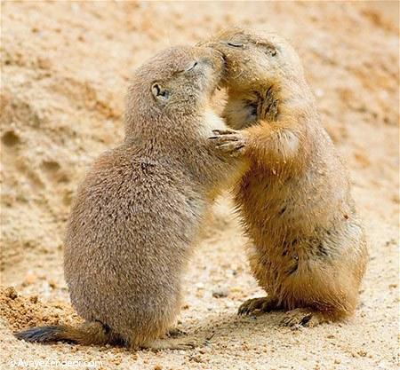 عکسهای زیبا از رابطه عاشقانه حیوانات (3)