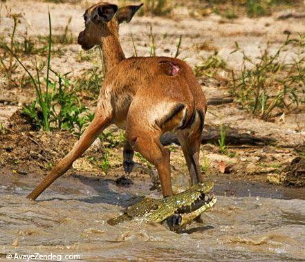 عکس هایی از دنیای حیوانات و حیات وحش
