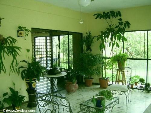 5 گیاه مناسب آپارتمانی