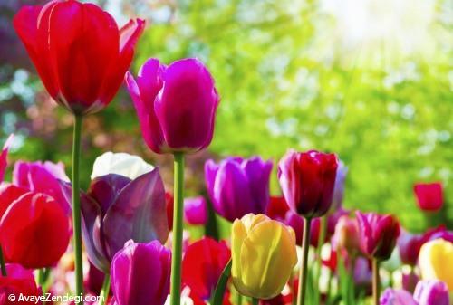 هر گلی یه بویی داره!