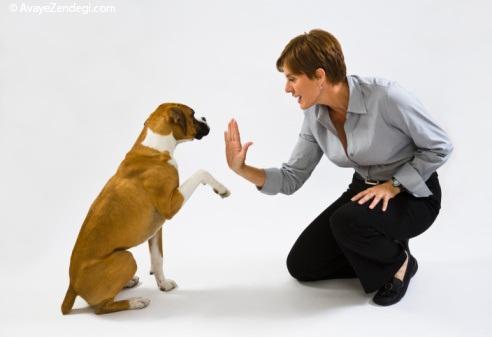 چگونه سگ خود را تعلیم دهیم؟ 9 روش برای تعلیم سگ