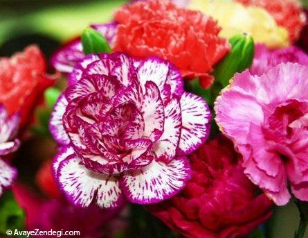 بهترین روش نگهداری از گل میخک چیست؟