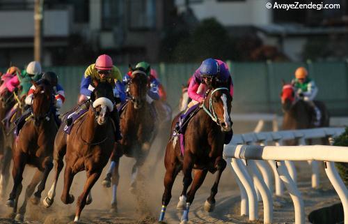 مسابقات اسب دوانی از نظر شرع جایز است؟