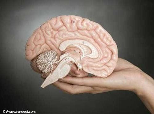 رکورددار سنگین ترین مغز در بین حیوانات