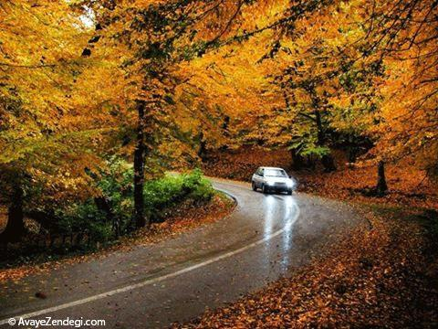نکته هایی درباره رانندگی در جاده های بارانی