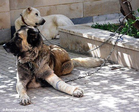 جریمه و مجازات برای حیوان آزاری