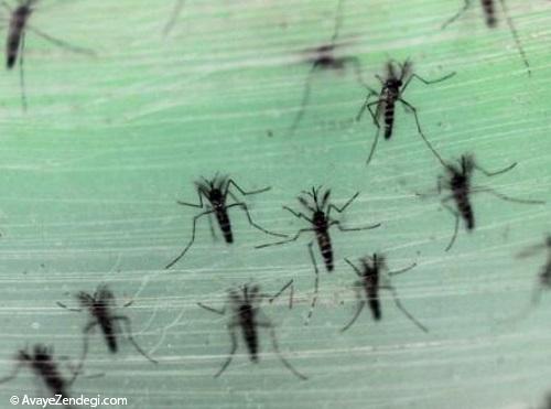 علائم و نشانه های ویروس بیماری زیکا چیست؟
