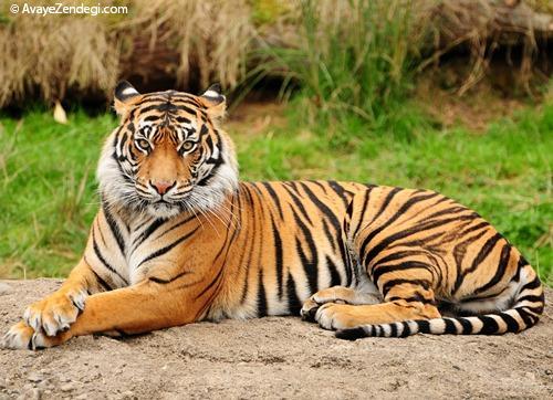 70 دانستنی جالب در مورد حیوانات (10)