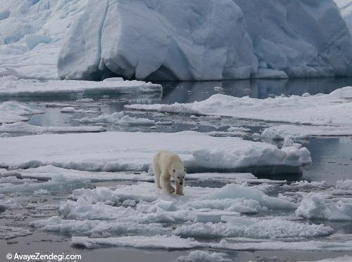 افزایش غیر قابل تصور دما در اقیانوس منجمد شمالی
